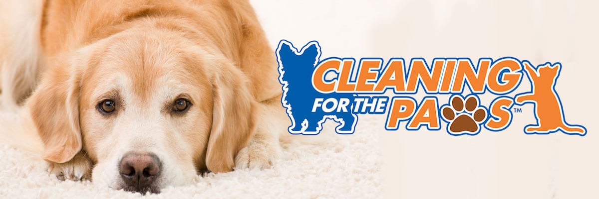 Cleaning For the Paws Chem-Dry Cleaned Carpet